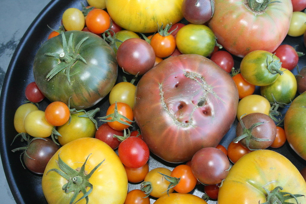 Laura McIntosh mixed tomatoes