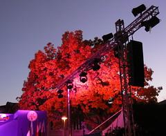 Tanzbaum a (AnnAbulf) Tags: licht folklore pinkfloyd musica musik albero scena baum luce fvg bunt gorizia bhne friuliveneziagiulia supershot grz friauljulischvenetien