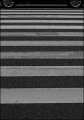(It's Stefan) Tags: blackandwhite bw white black blancoynegro monochrome lines car japan kyoto noiretblanc geometry 日本 crosswalk kansai zebrastreifen biancoenero 黑与白 黑與白 siyahvebeyaz schwazweis 黒と白 ©stefanhöchst