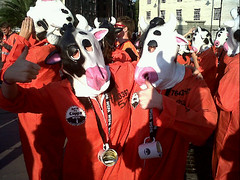 cow-1-notinmycuppa (NotinmyCuppa) Tags: london town support factory cows no farming free say in nocton notinmycuppa