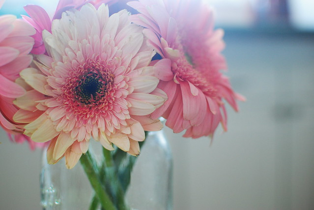 valentine's-inspired gerber daisies