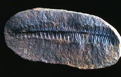 Fossilized   Floral Fauna765.jpg (ShutterStone.com) Tags: canada fossilized floralfauna765jpg