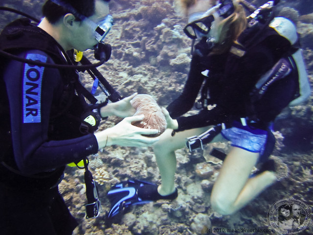 Down Under With Divemaster