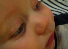 Little Lashes