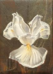 A PAINTING A DAY #54 (JanBurch) Tags: iris plant flower art painting subject 54 oilpainting apaintingaday janburch wwwjanburchcom