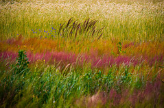 nature as an artist (iwona.kilichowska) Tags: field meadow nature painting colorful colours weeds abstract countryside farm rural scenery plants grass flora