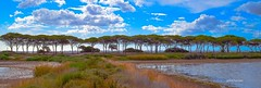 un dégradé. (gillesfournier005) Tags: le05072017 panorama bleu arbres d5100 mer étang vert bande sable couleurs