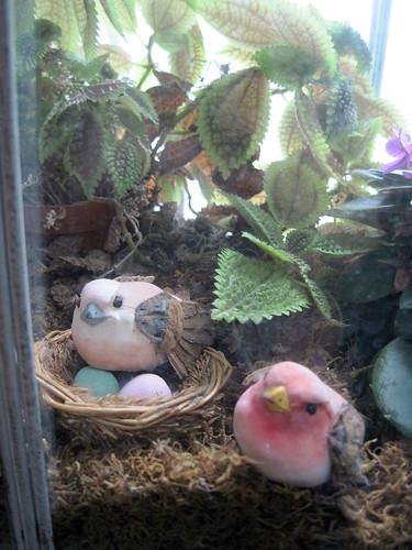 Mushroom Birds inside my Wardian Case