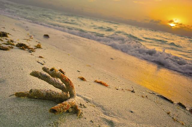 Coral Sun