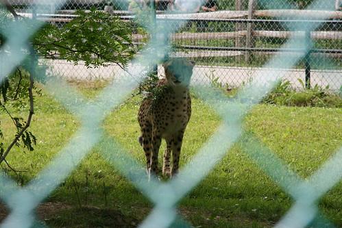 Zoo Zoo Zoo