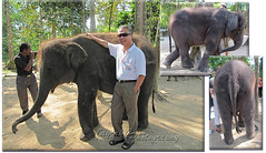 My beloved spouse, John and the Asian Elephants (Elephas maximus)