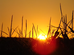 | golden sunset | (<ZOLEE/>) Tags: sunset summer nature gold corn sony slovakia 2008 h7 ilovemypic