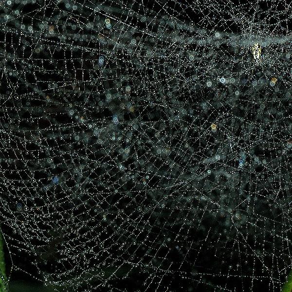 きらめく星の巣