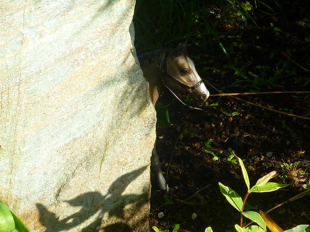 bashful pony
