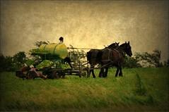 Farming...the old-fashioned way ( Brenda ) Tags: horses rural farm farming amish missouri jamesport ruralmissouri nikond5000 brenda0206