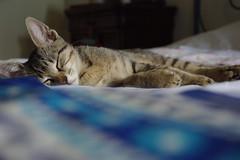 Come ti dormo bene (Elibellula e il colore del grano) Tags: catnipaddicts