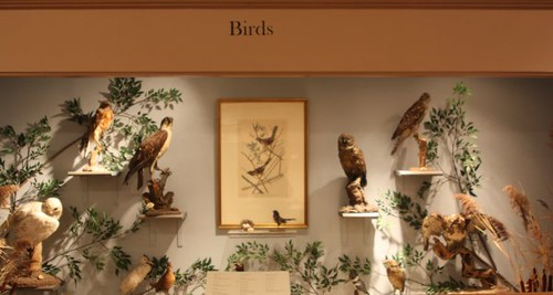 Bird display at Staten Island Museum