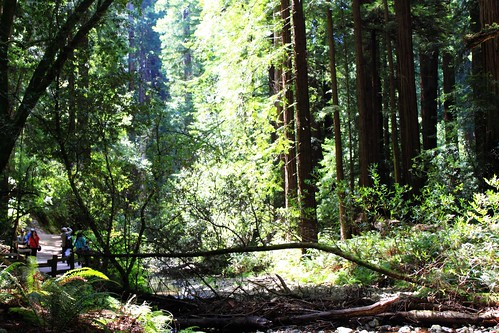 Muir Woods state pare