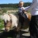 Quentin_Pony_2