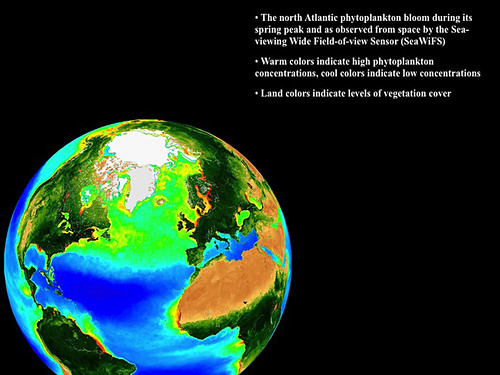 Phytoplankton by Oregon State University.