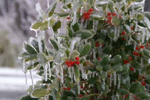 holly day on ice