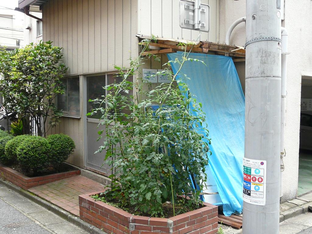 Street Corner Tomato Construction