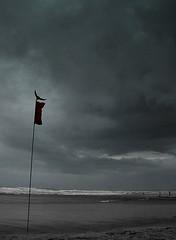 Udaan (fatmanwalking) Tags: trip bird beach silhouette fly goa crow leh ladakh anuragkashyap amittrivedi