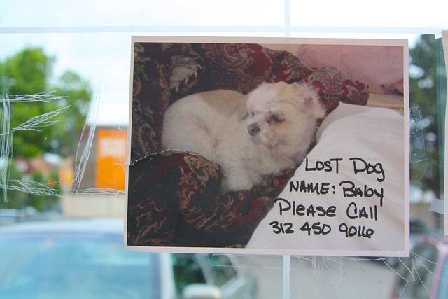 Lost dog baby