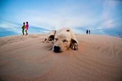 (Nilton Ramos Quoirin) Tags: sleeping dog praia beach brasil jericoacoara dune fisheye cachorro cear dormindo olhodepeixe dunadopordosol