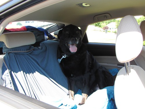 The Dog is in the Car!