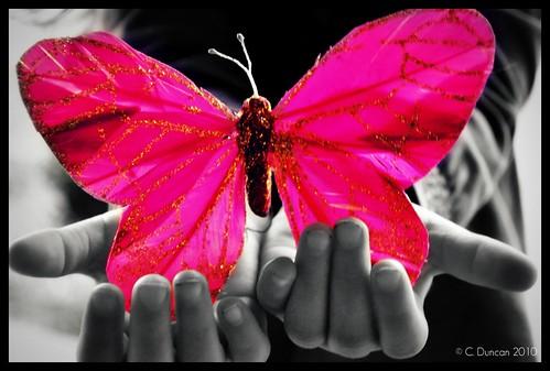 Pink - 187/365