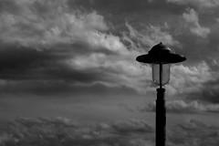 Suenos (sweet_prince) Tags: toronto landscape blackwhite paisaje harborfront surealism surealismo