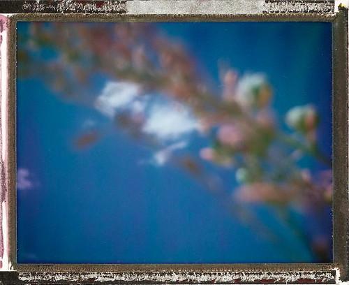 Blur Blossom