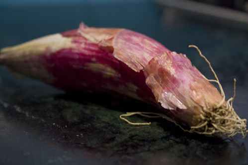 Torpedo Onion