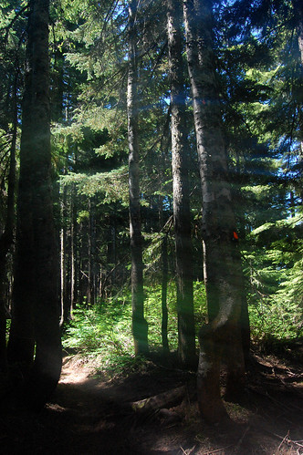 Vancouver - Cypress Mountain, Eagle Bluffs Hike (28)