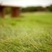 tall grasses by jasfitz