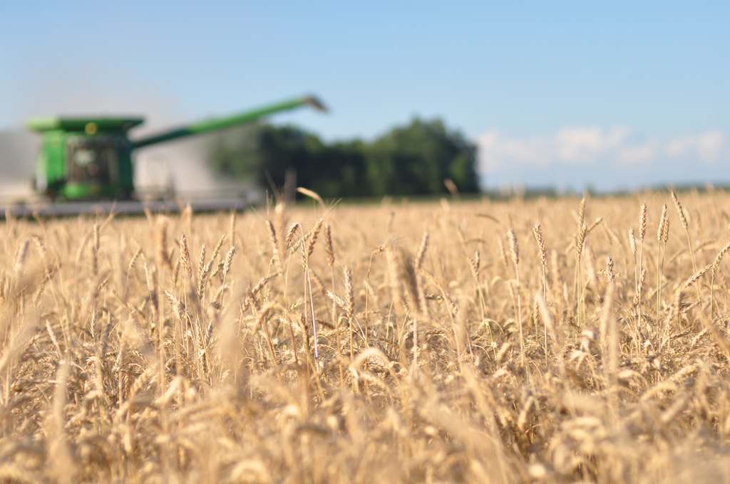 Wheat, Combines, & Harvesting Happiness: A Day in Photos