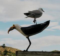Sea gull sitting on a fake sea gull