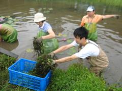 志工們在濕地中清除雜草
