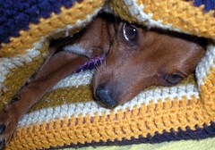 Sooo cold...:) (***Carmem***) Tags: dog cold brasil pelotas inverno frio sul ded