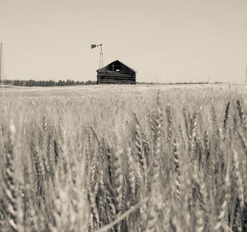 Windmill Cabin