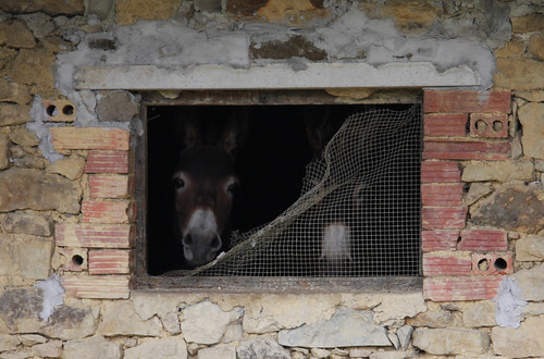 Lola and Chica, Donkey Window