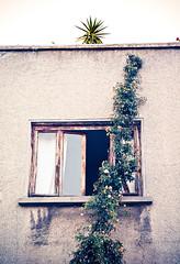 iluminaciones ([eme]) Tags: plants window turkey plantas turkiye istanbul ventanas estambul turqua