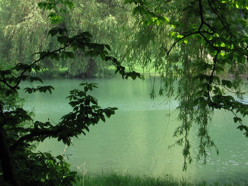Lake romantic with weeping willow