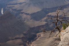baudchon-baluchon-grand-canyon-6446240710