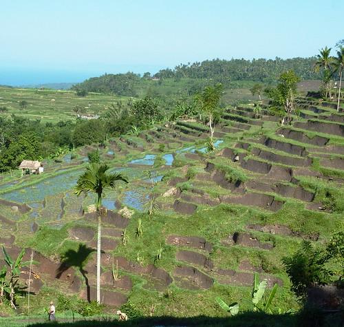 Bali-Tirtagangga (87)