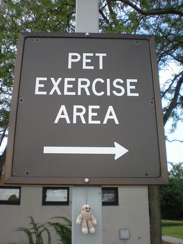 Exercising Pablito
