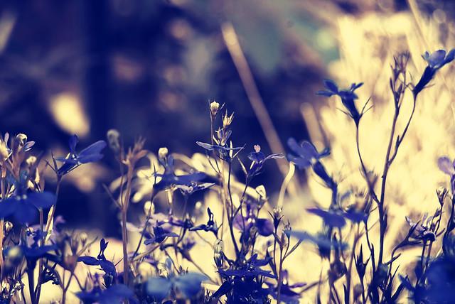 boje lila