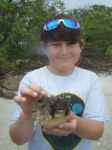 Seth and a burrfish