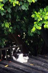 IMG_0504 () Tags: taiwan taipei    taipeicounty   houtong    catvillage rueifangtownship houtongcatstreet